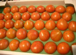 フルーツトマト 極秀品 2kg超