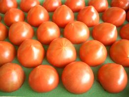 フルーツトマト 極秀品 約1kg