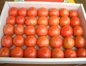 フルーツトマト 秀品 2kg超