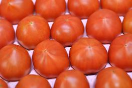 フルーツトマト 秀品 約1kg