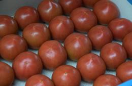 フルーツトマト 生産者セレクト秀品 約1kg