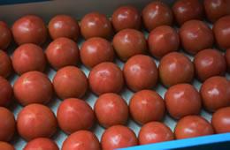 フルーツトマト 生産者セレクト秀品 約2kg