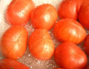 フルーツトマト フルーツトマト    スタールビー
