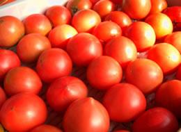 トマト お得用 約4kg