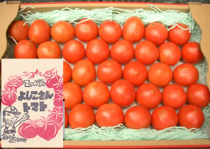 てっぺんとまと てっぺん よしこさんトマト約2kg