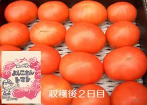 てっぺんとまと てっぺん よしこさんトマト約1kg